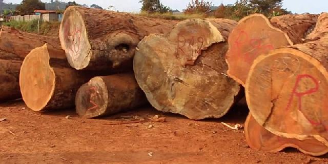 logging in cameroon