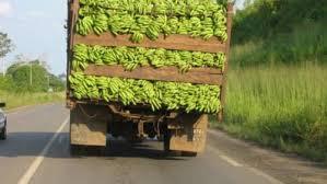 CDC Bananas