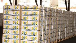 Cameroon Banana Export