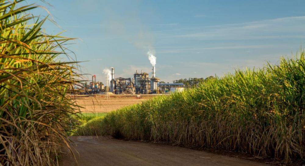 Brazil-sugarcane