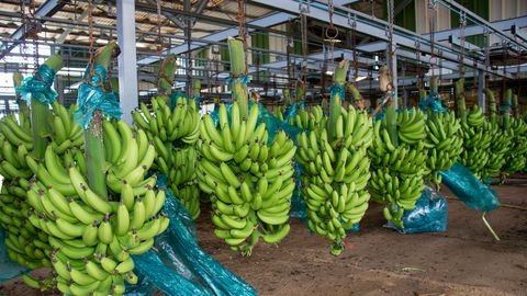 CDC Banana-Cameroon