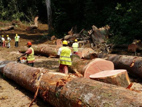 Cameroon: MINOF Ignores German Cooperation, European Union, Launches SIGIF2